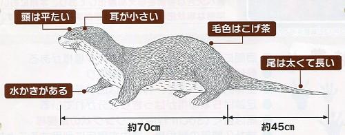 ニホンカワウソ 絶滅 危惧 種