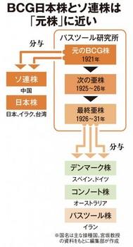 BCG接種仮説2.jpg